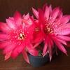 花鏡丸が慌ただしく開花していきました
