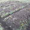 11月末、畑の作業の話。