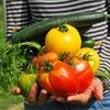 一石二鳥、家庭菜園!にトライするはずの冬の計画