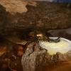 「初心者でも繁殖できる?」ニジイロクワガタの幼虫が生まれました