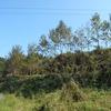 クヌ木を植えて大金持ちに種を植えて木になり切ってシイタケに