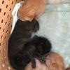 ●仔猫を4匹保護しました。そして乳母猫さんの元へ