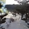 70代シニアのインスタグラム295日~ギンギツネ(キタキツネ)が家の庭に!