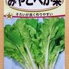 「山東菜」を水耕栽培しています。成長が早いらしいので40日ほどで収穫したいです