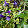 雨の野の花とお野菜