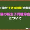 """【猫の新生子同種溶血】~""""すきま時間""""の獣医学~"""
