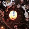 岡崎公園 お花見