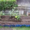 【家庭菜園】現在の畑の様子(2021年9月28日)