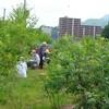 森の工房AMA→屋上の草取り 庭の花たち