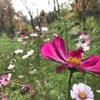 《花の文化園》紅葉も楽しめる河内長野のデートや写真スポットはこちら‼