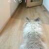 仲が悪い猫同士の仲良し計画その2