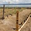 生態学者が主導した自然破壊事業