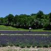 スキー場の夏は花の園~たんばらラベンダーパーク~