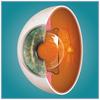 【視力矯正】バンコクでICL手術した話④【手術前~手術後】