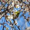 2月の栃谷戸公園に行ってきました