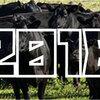 【2018年】「肉用牛飼養頭数」ランキング