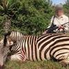 今度はシマウマ 絶滅危機種を犠牲にして続けられるトロフィーハンティング