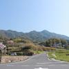 琴石山で巨樹ヤマザクラ鑑賞そして新ルートを歩く