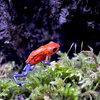 生き物散歩 体験型カエル館KawaZoo(カワズー) その1
