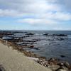 平磯海岸のイソヒヨドリ