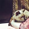 最近の猫さんから、おしえてもらったこと。7回祈ること。