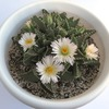フォーカリアの花