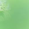 大池公園花しょうぶまつりの緑