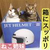 箱にスッポリ収まる猫3姉妹!