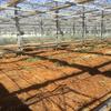 BLOF理論、要の技術!太陽熱養生処理を行いました。