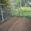 ケシ畑耕耘・畝作り シキミ定植1か月の様子