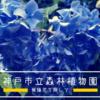 紫陽花散策、ハイキング、田舎の夏「神戸市立森林植物園」