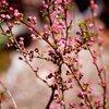 立春/今日の俳句 ≪第2402号≫