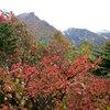 日本一美しい!? 大雪山の紅葉