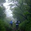 森を歩き山に登る