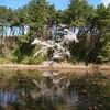 新潟市東区「じゅんさい池公園」の桜