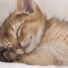 睡眠・休息どれだけとれてる?疲れを取るための実践法