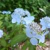 6月の高尾駒木野庭園に行ってきました