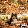 季節の変わり目!「秋」に注意したいこと
