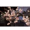 【春近し】東京都内の梅が咲き始めたので写真を撮ってきました