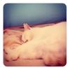 雨の夜ネコと寝る