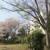 泉北ニュータウン(光明池)の桜景色