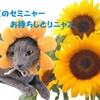 「初ねこ倶楽部 軽井沢版 第2回」いよいよ開催ニャ!