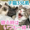 寝る時はいつも一緒の子猫3兄弟!【仲良し子猫3兄弟】トイレも一緒に!