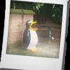 ラクナウの忘れ得ぬペンギン