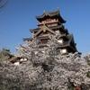 桜満開の京都「伏見桃山城・伏見十石船」