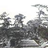 お宮の下の松の木