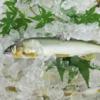 【DoChubu掲載】矢作川のアユをまるごと味わう!第38回「味わって知る わたしたちの海」