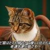 サビ猫はとても穏やかで優しく甘えん坊。幸運を運ぶ猫です!