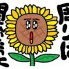 キャラ ひまわりさん その11 紹介