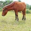 馬がもらえます。我らが北海道芽室町のふるさと納税。